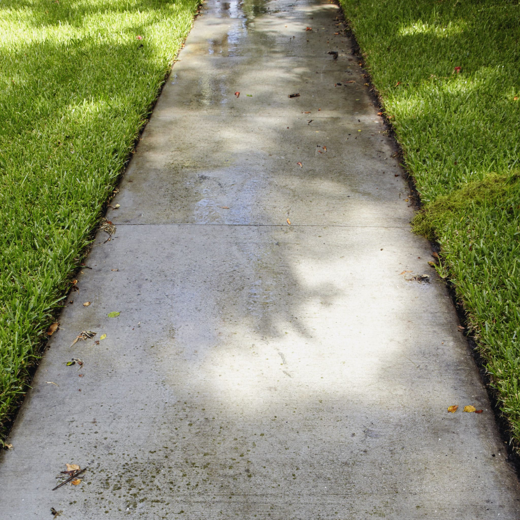 wet sidewalk through grass JDKYXZ8 scaled